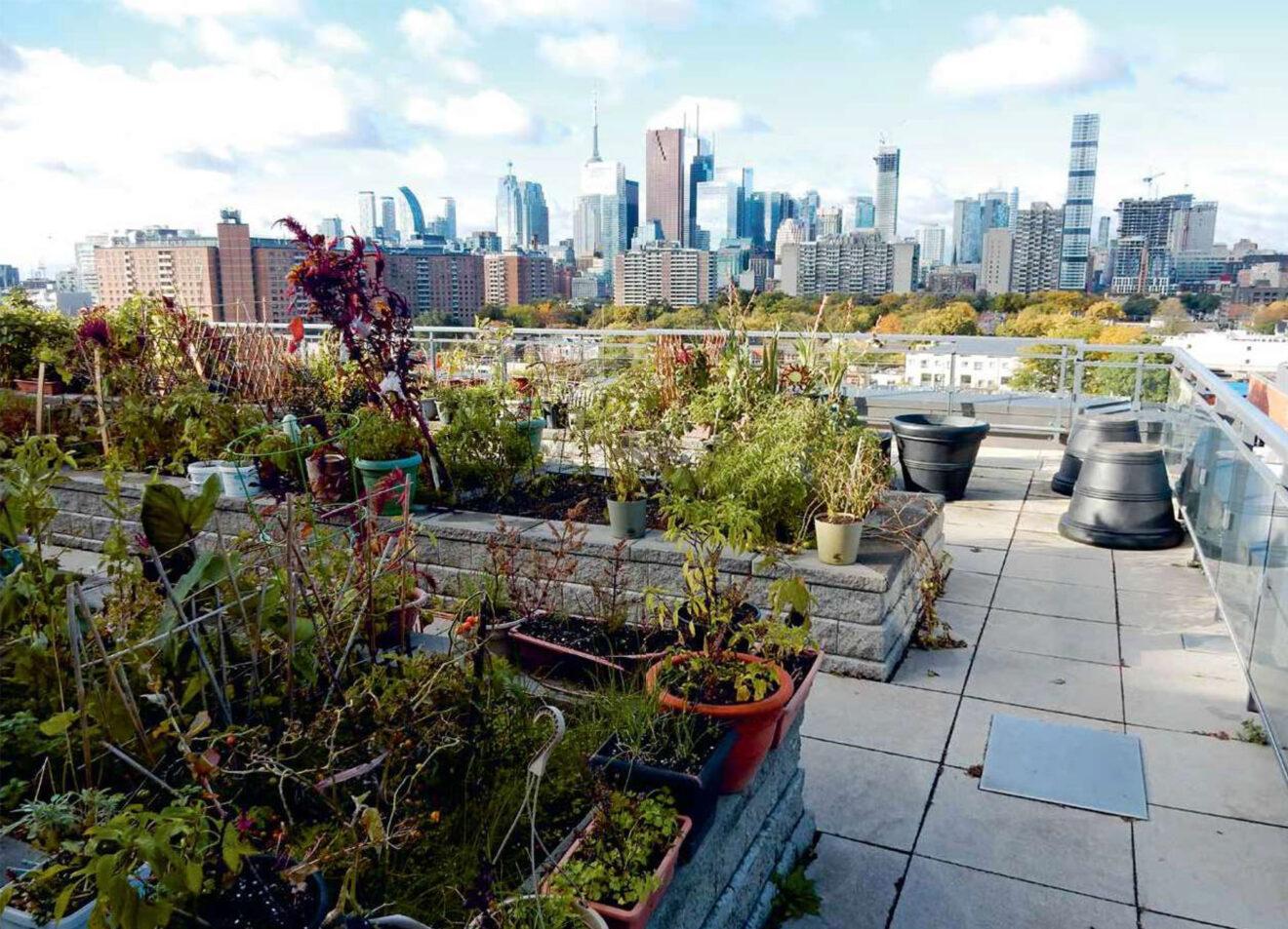 Tuinieren op het dak van een TCH-gebouw in 2018